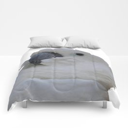 Ruffled Feathers Of A Blue Eyed Cockatoo Isolated Comforters