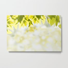 Elm green leaves and blurred space Metal Print