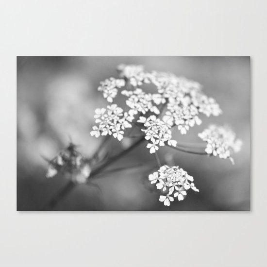 White flower for Valentine's day II Canvas Print