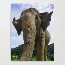 Elephant in Northern Thailand Poster