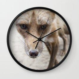 Milkweed - Cinnamon Fox Wall Clock