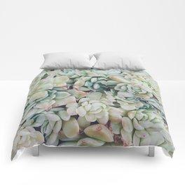 Primrose Green Comforters