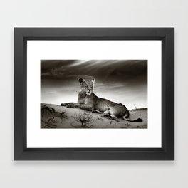 Lioness on desert dune Framed Art Print