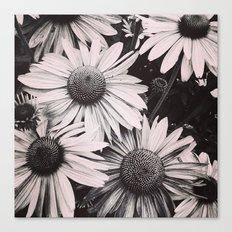 Sunlight Fading Canvas Print