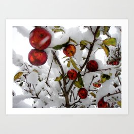 Apple Tree in Snow - 2011 Art Print