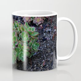 Succulent cactus green flowers red finished a lot of Coffee Mug
