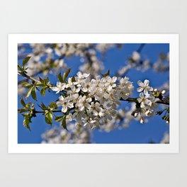 Magic White Cherry Blossom Dream Art Print