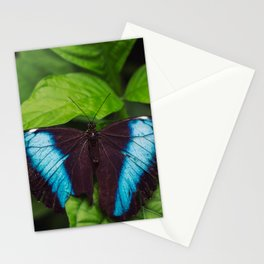 Banded Blue Morpho (𝘔𝘰𝘳𝘱𝘩𝘰 𝘢𝘤𝘩𝘪𝘭𝘭𝘦𝘴) Stationery Cards