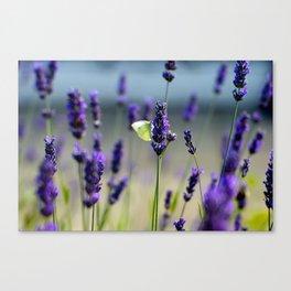 violette soleil Canvas Print