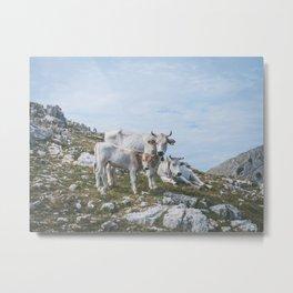 Mountain cows, Italy Metal Print