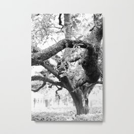 The Florida Tree Metal Print