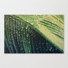 Wet leaf Canvas Print