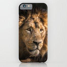 Mr. Lion King - Close up lion portrait iPhone Case