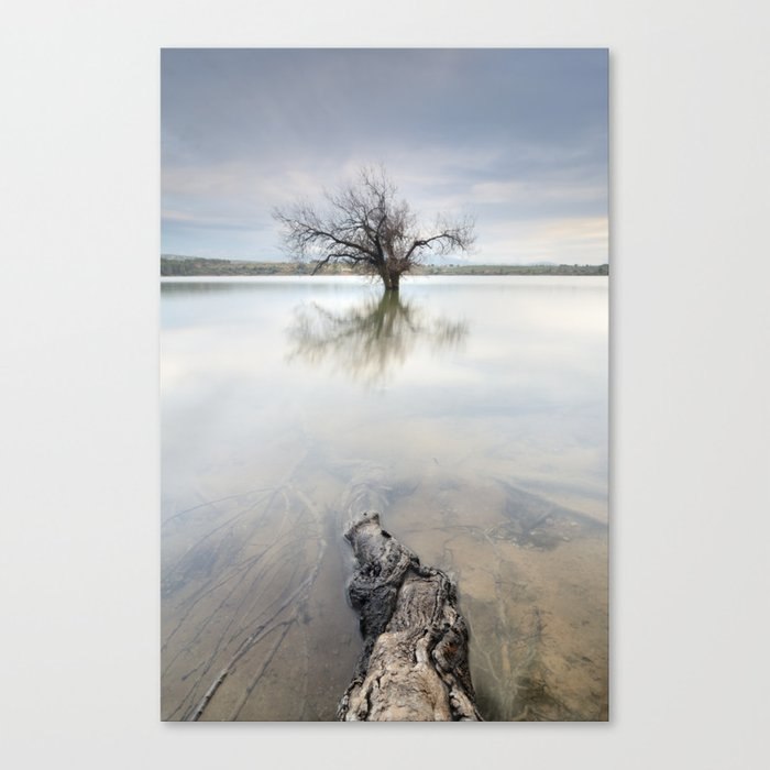 Roots and trees... Canvas Print
