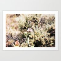 Thistle in Blue Basin  Art Print