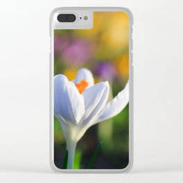 Colorful Crocuses in Spring Clear iPhone Case