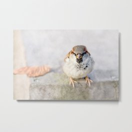 Don't Mess With Sparrows Metal Print