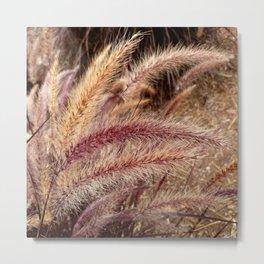 Fountain Grass inthe wind Metal Print