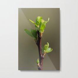 Spring bud Metal Print