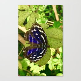 Butterfly WIshes Canvas Print