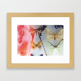The Butterfly Collection Framed Art Print