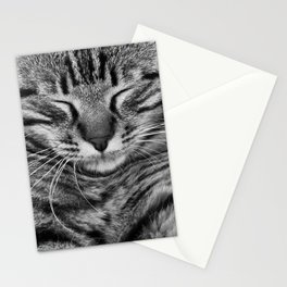 Irresistible Kitty Cuteness Stationery Cards
