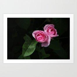 Pink and Dark Green Roses on Black Art Print