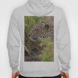 Leopard in the Wild Hoody