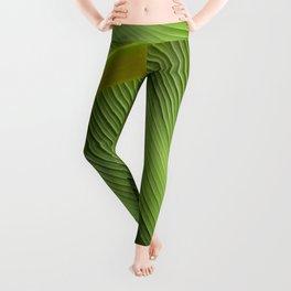 Banana Leaf Leggings