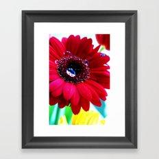 Gerbera Framed Art Print