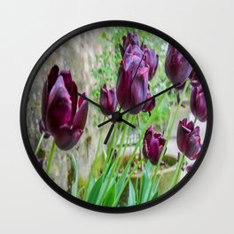 The Lost Gardens of Heligan - Black Tulips Wall Clock