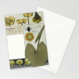 Maurice Pillard Verneuil - Étude de la plante (1903): Yellow Water-Lily Stationery Cards