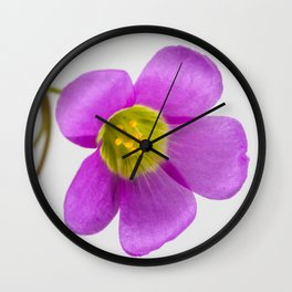 purple oxalis flower Wall Clock