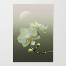 White Orchid at Dawn Canvas Print