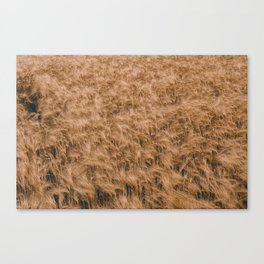 Vintage Field 04 Canvas Print