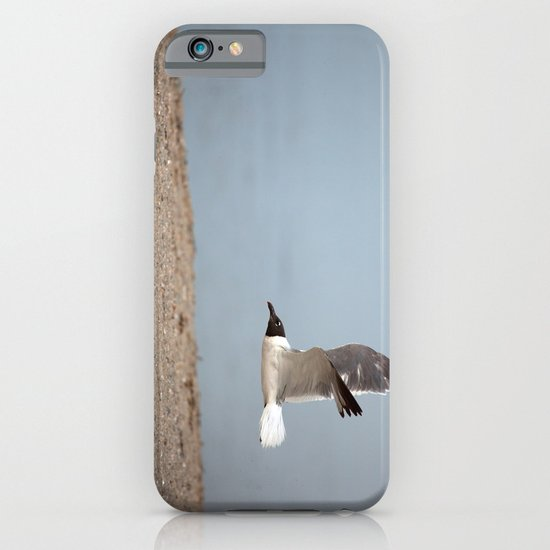 Laughing Gull in Flight iPhone & iPod Case