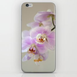 orchid close up iPhone Skin