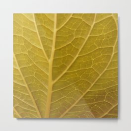 Leaf Detail Metal Print