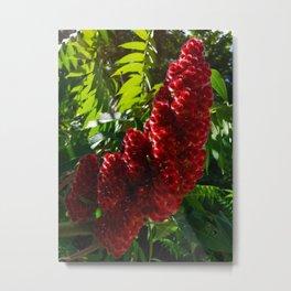 Sumach Flowers Metal Print