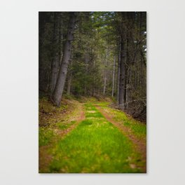 the mindful path Canvas Print
