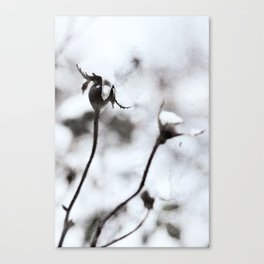 Rose Hips in Winter Snowfall Canvas Print