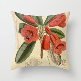 Rhododendron dichroanthum, Ericaceae Throw Pillow