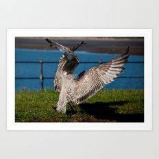 Two squabbling Gulls Art Print