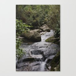stream in the abel tasman national park Canvas Print