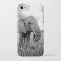 south africa iPhone & iPod Cases featuring African Elephant, South Africa by Shannon Wild