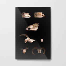 Skull Cabinet Metal Print