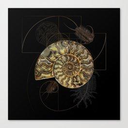 Ammonite Trilobite Fibonacci Spiral Canvas Print