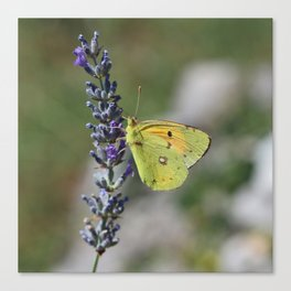 Yellow Butterfly On Lavender I Canvas Print