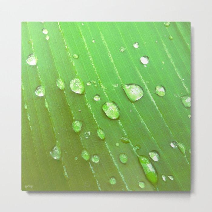 Jungle Drops. Metal Print