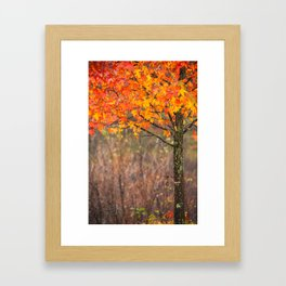 Autumn In Connecticut Framed Art Print
